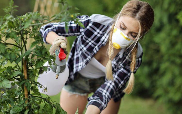 Reasons that make children more sensitive to pesticides
