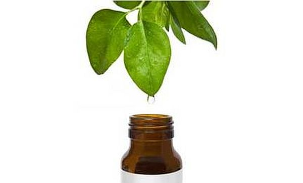 tea tree oil_2