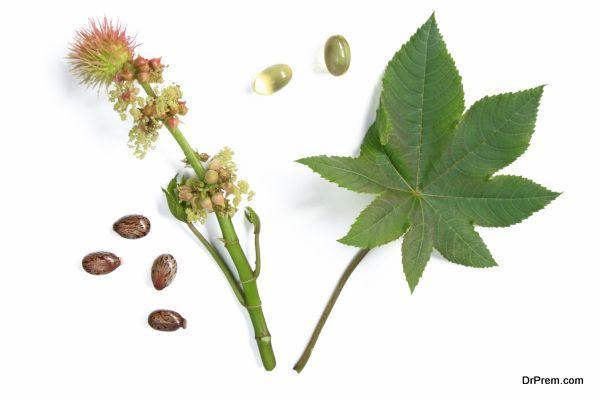 castor plant - Ricinus communis